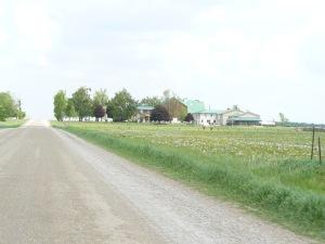 tranquil farmscape